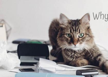 Cat laying on cluttered desk